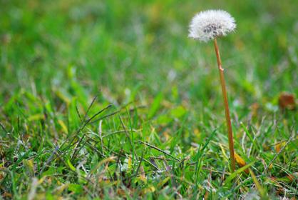 Nature's Wish