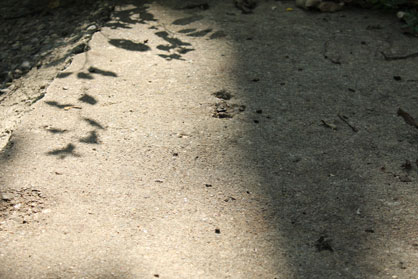 SidewalkContrast