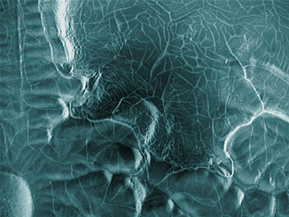 Bacteral-Painting