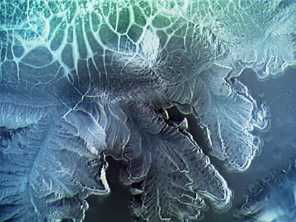 BacteralPainting2