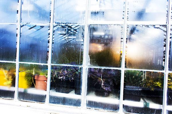 Liz Graves Greenhouse Yellow Pots