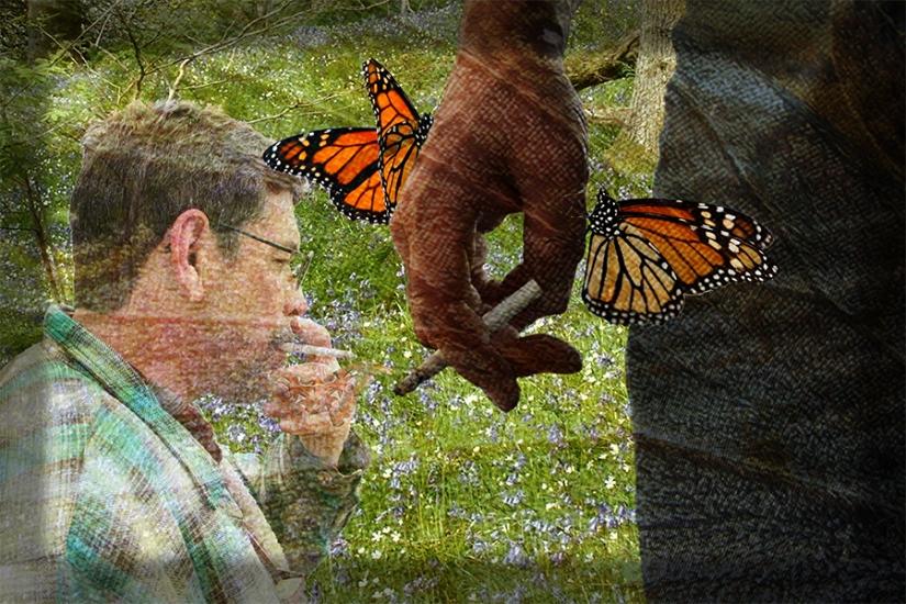 Photo-11---Endangered-Butterflies-WEB