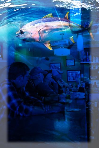 Photo-8---Bluefin-Tuna-WEB