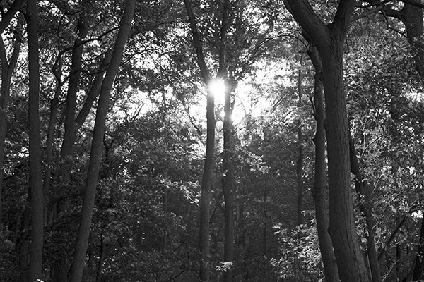 b&w forest