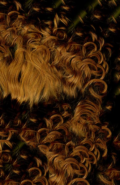 hair-web