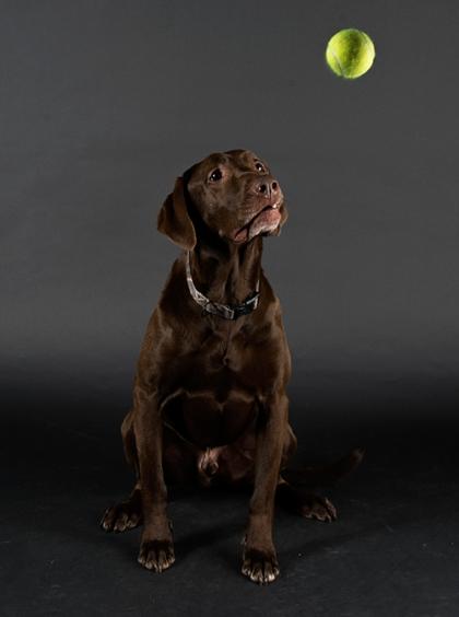 lifeofdogs3